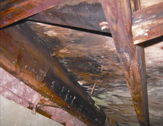 mold and rot in a Camarillo crawl space