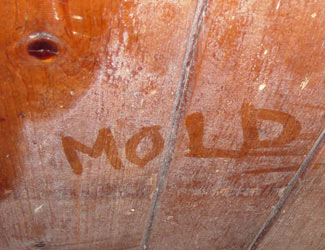 mold damage remediation and removal California