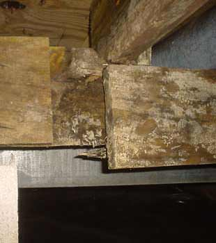 Extensive basement rot found in Santa Barbara by So Cal Crawl Space Solutions